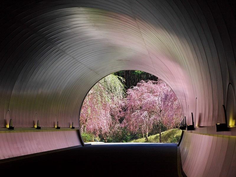 画像: こだわりの花めぐり旅|クラブツーリズム