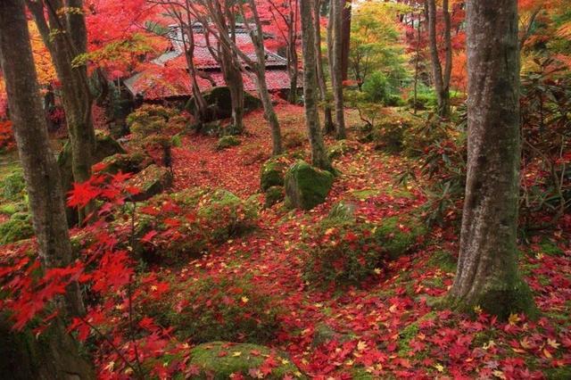 画像: 教林坊の紅葉と琵琶湖の夕景 日帰り【名古屋駅出発】