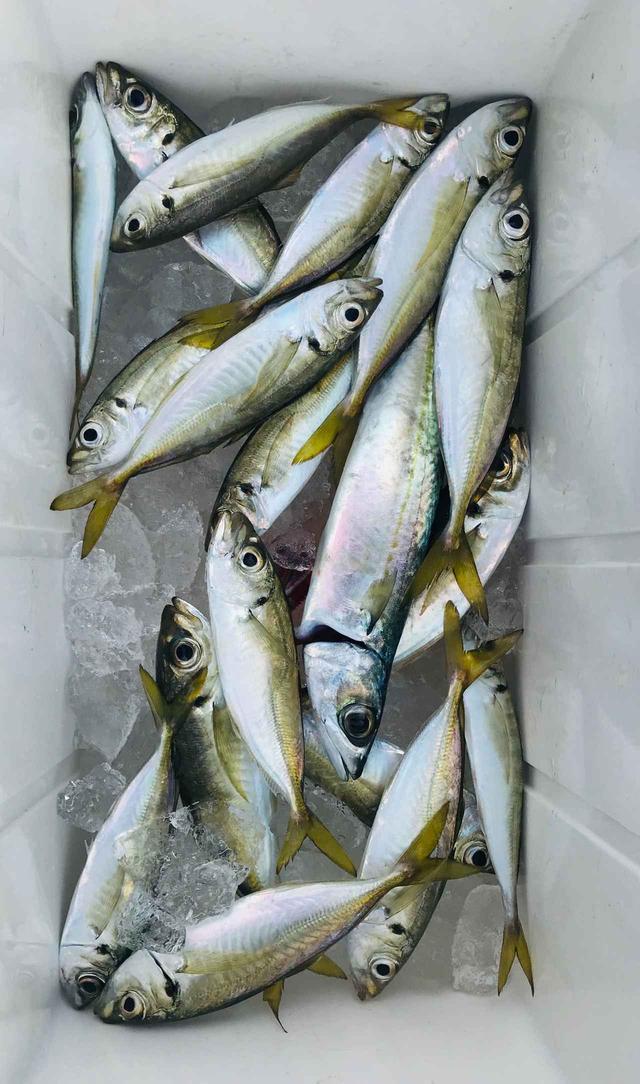 画像: 釣りたての魚をご賞味いただきます