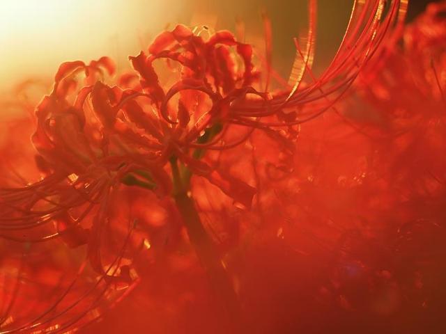 画像: 2019年9月21日(土)『◆後日講評会付き◆国営昭和記念公園・彼岸花撮影会 日帰り』 【昭和記念公園・西立川口前】