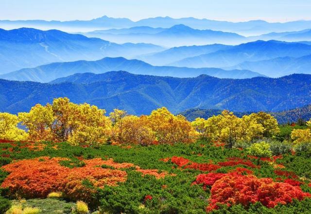 画像: 2019年10月1日(火)『天空の絶景・乗鞍岳の紅葉と栂池自然園の草紅葉 3日間』【新宿出発】