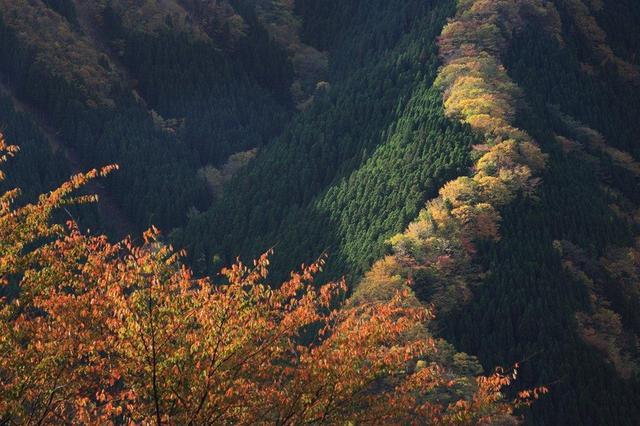画像: 龍が天に昇るような絶景 行者還林道 ナメゴ谷の紅葉 2日間【名古屋駅出発】