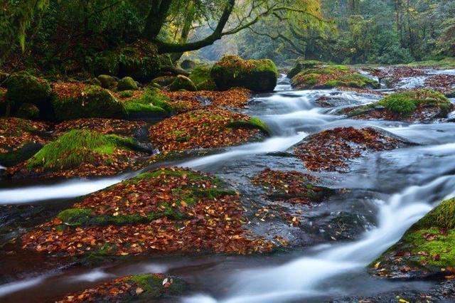 画像: 紅葉の菊池渓谷と阿蘇大観峰からの雲海 神秘的な水のカーテン 鍋ヶ滝 3日間【伊丹または関西出発】