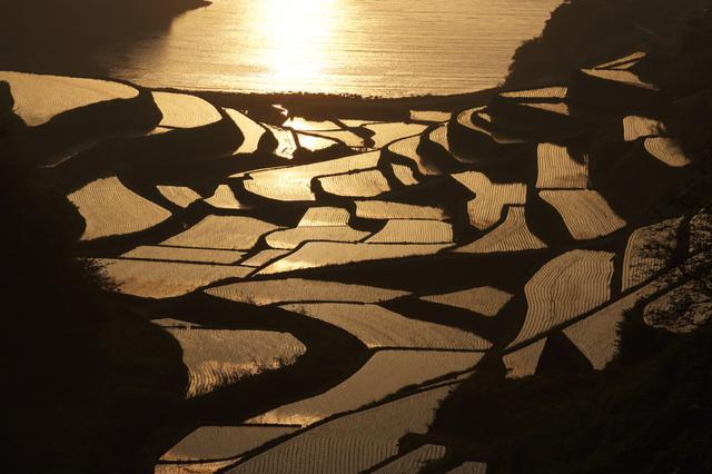 画像: 浜野浦の棚田
