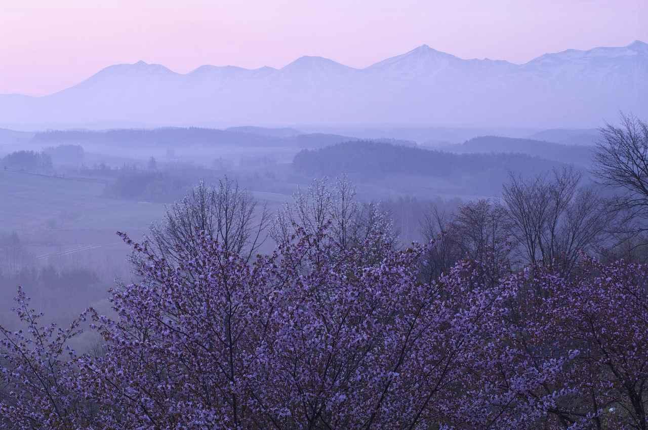 画像: 春の彩り