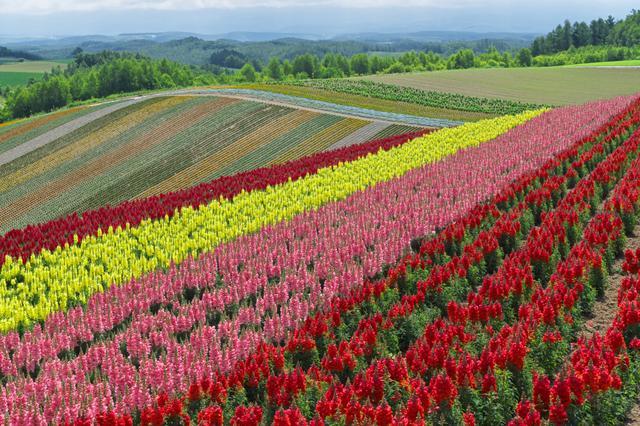 画像: 富良野の丘風景