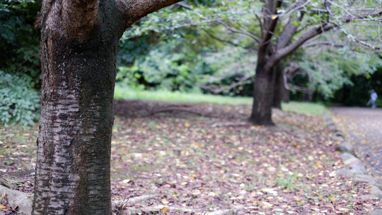 画像: 焦点距離35mmで撮影 手前の木を主役にした構図