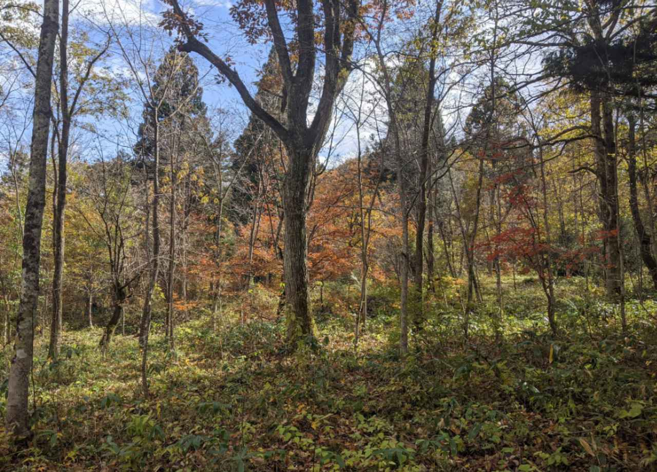 画像1: 10月のアファンの森 スタッフ撮影
