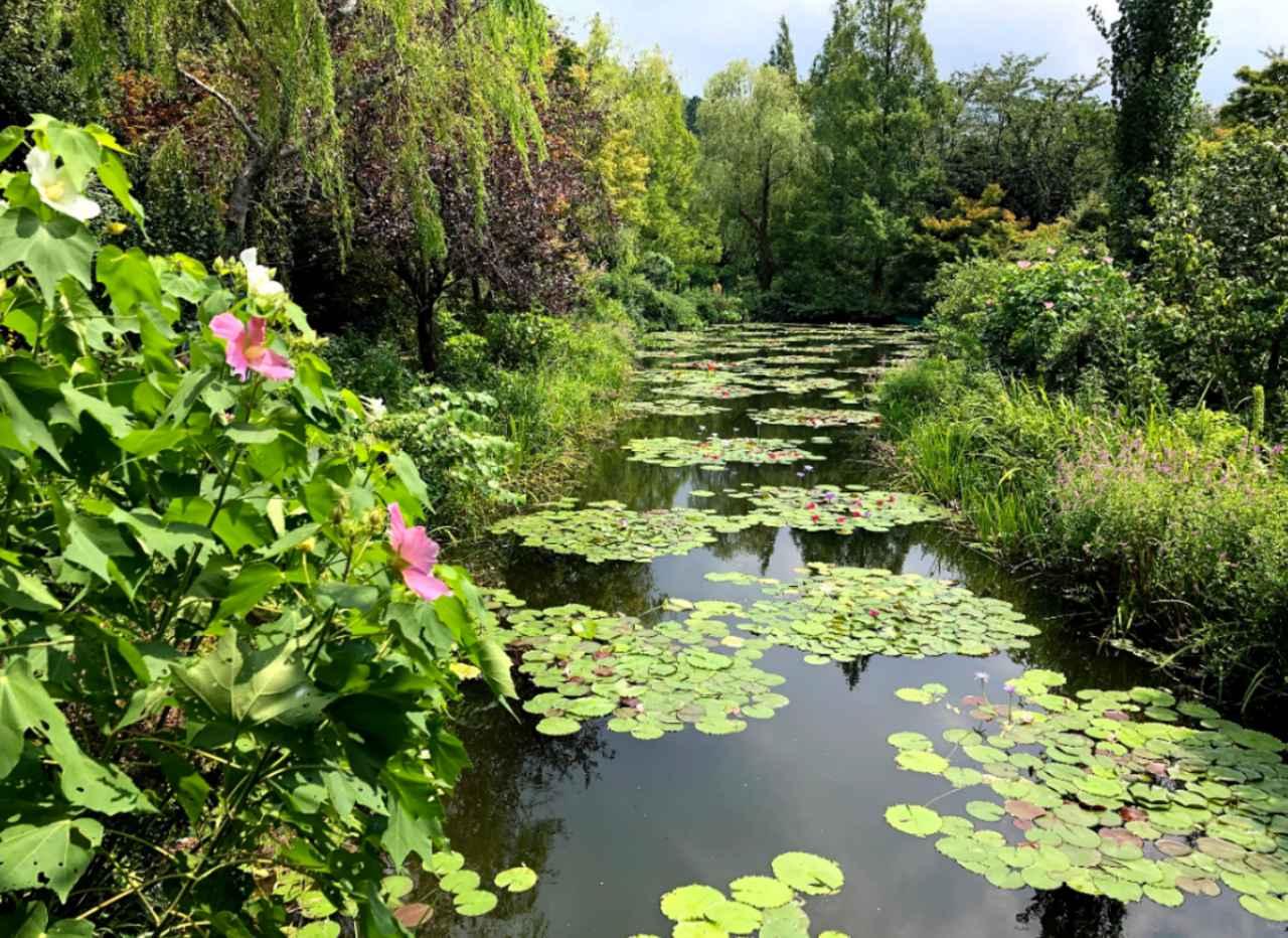 画像: 北川村モネの庭マルモッタン スタッフ撮影