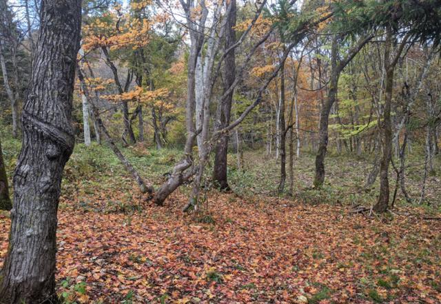 画像2: 10月のアファンの森 スタッフ撮影
