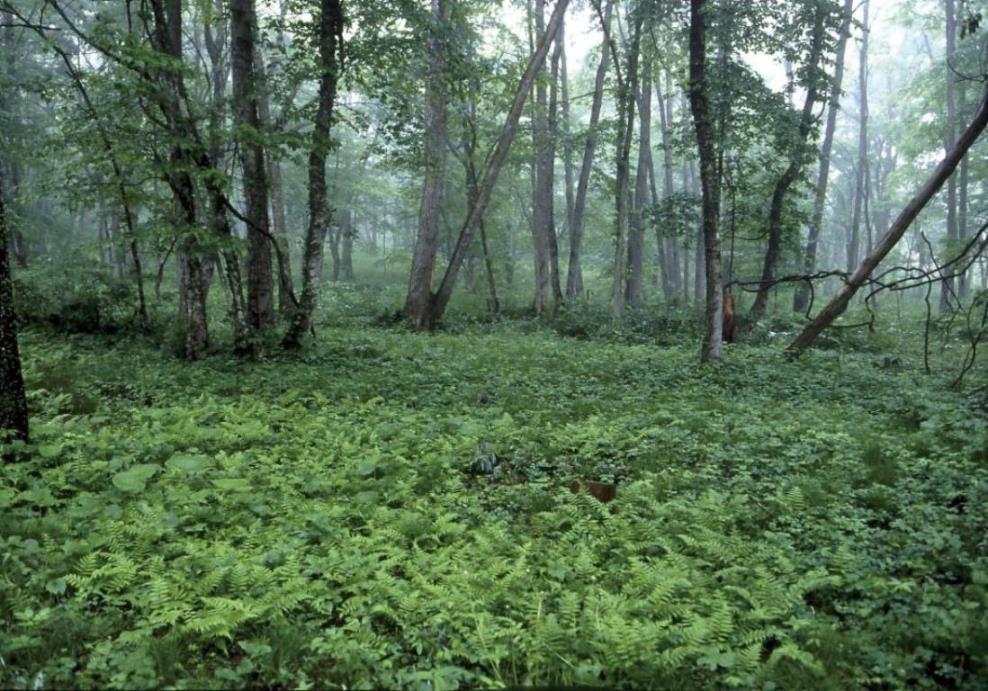 画像: <花めぐり>『長野・黒姫高原の森を特別公開 C・W・ニコルさんが甦らせたアファンの森 2日間』【上野・新宿出発】|クラブツーリズム