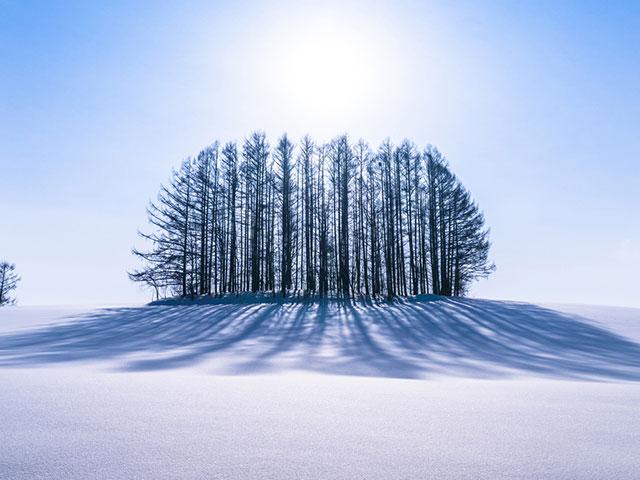 画像: 国内 冬 冬景色・北海道ツアー・旅行|写真撮影の旅│クラブツーリズム