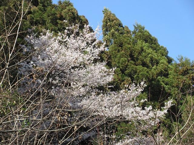 画像13: 【山旅会】陣見山
