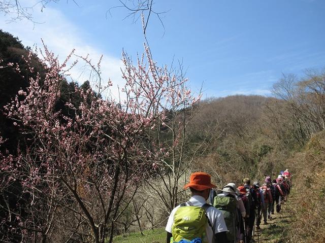画像3: 【山旅会】陣見山