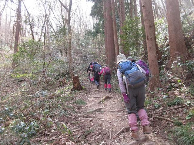 画像7: 【山旅会】国上山と角田山 その2