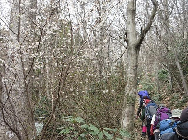 画像4: 【山旅会】国上山と角田山 その1