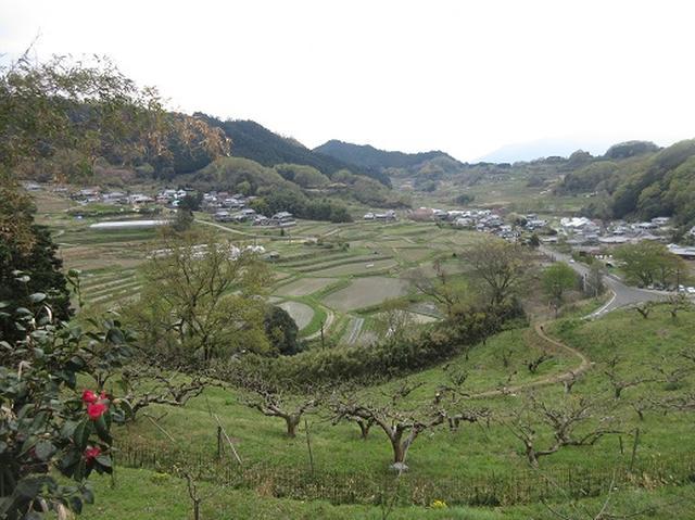 画像8: 【山旅会】談山神社から飛鳥・一目千本の吉野山へ