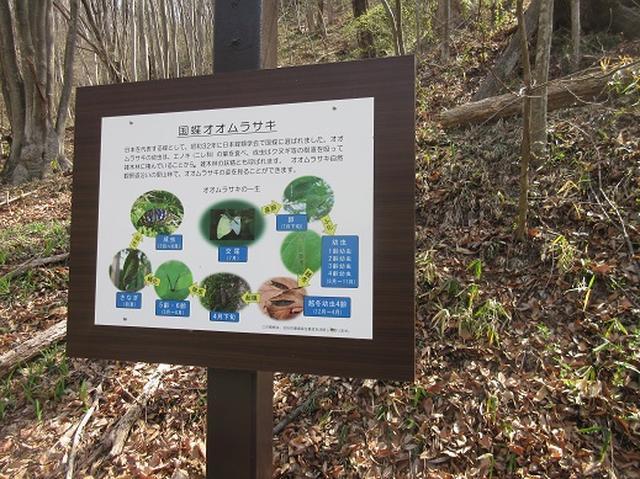 画像3: 【山旅会】オオムラサキ自然歩道と新府桃源郷