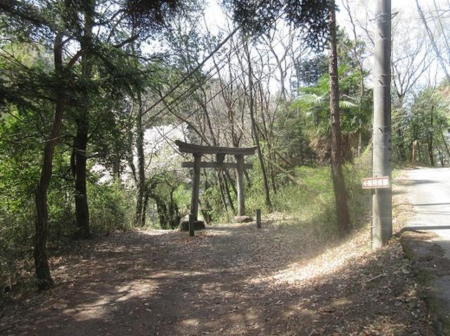 画像6: 【山旅会】オオムラサキ自然歩道と新府桃源郷