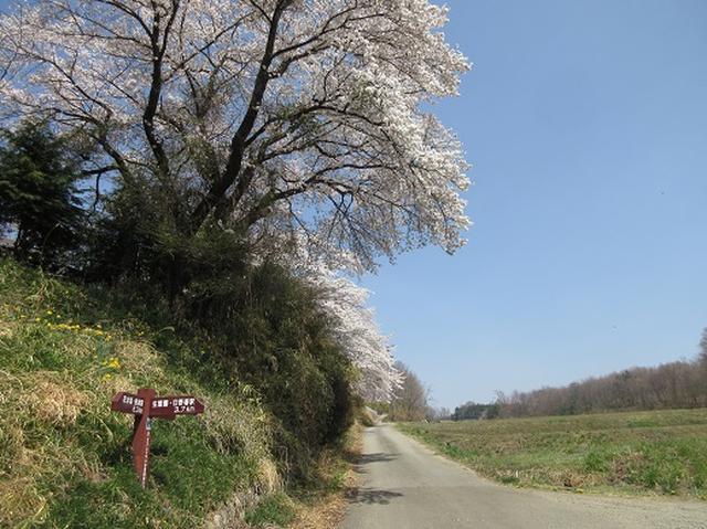 画像4: 【山旅会】オオムラサキ自然歩道と新府桃源郷
