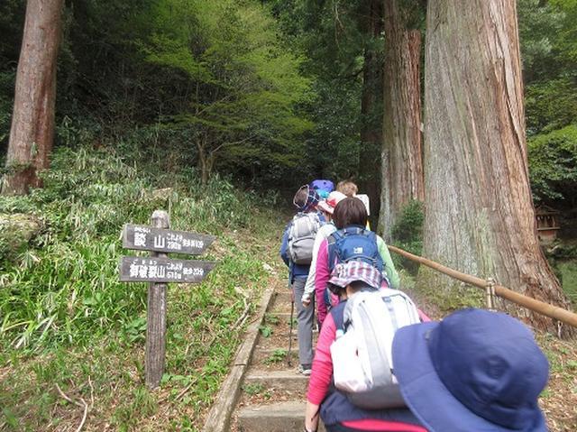 画像4: 【山旅会】談山神社から飛鳥・一目千本の吉野山へ
