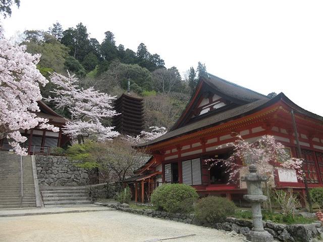 画像2: 【山旅会】談山神社から飛鳥・一目千本の吉野山へ