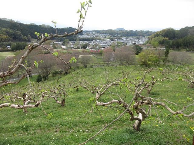 画像9: 【山旅会】談山神社から飛鳥・一目千本の吉野山へ