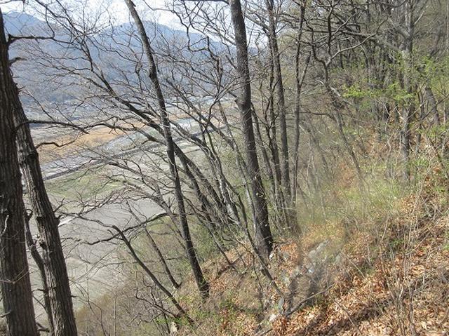 画像8: 【山旅会】オオムラサキ自然歩道と新府桃源郷