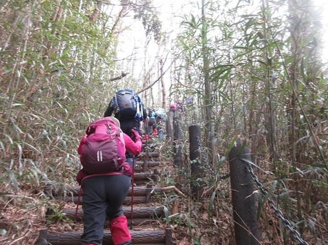 画像1: 【山旅会】角田山はカタクリ咲くの花の名山でした!