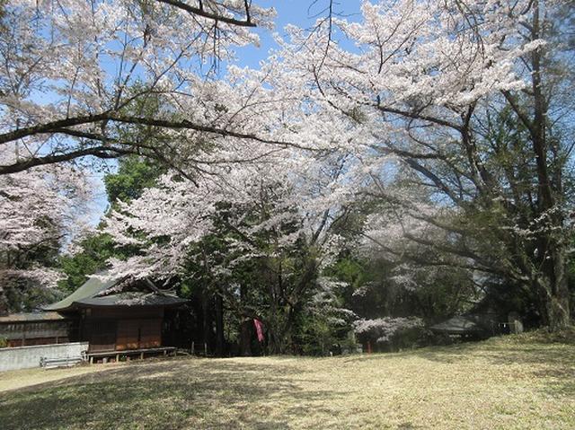 画像7: 【山旅会】オオムラサキ自然歩道と新府桃源郷