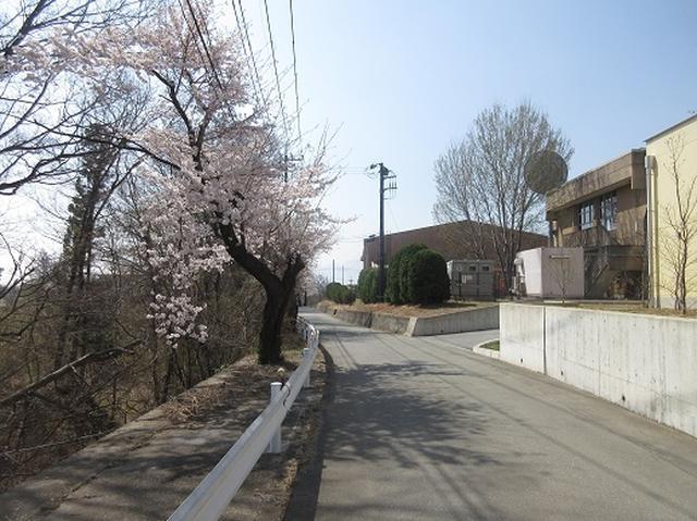 画像2: 【山旅会】オオムラサキ自然歩道と新府桃源郷
