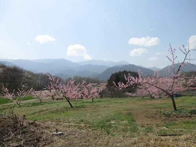 画像9: 【山旅会】オオムラサキ自然歩道と新府桃源郷