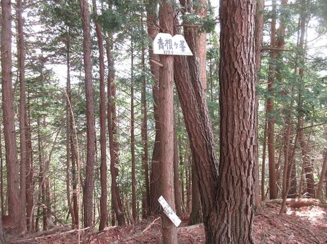画像8: 【山旅会】吉野山・青根ヶ峰に登ってきました!