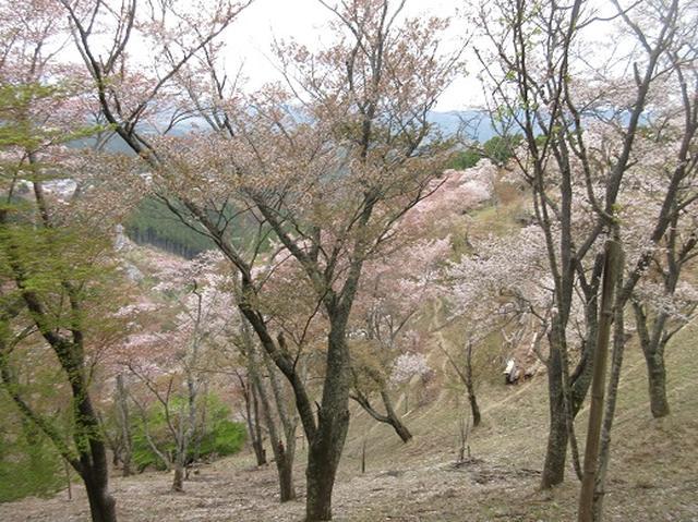 画像9: 【山旅会】吉野山・青根ヶ峰に登ってきました!