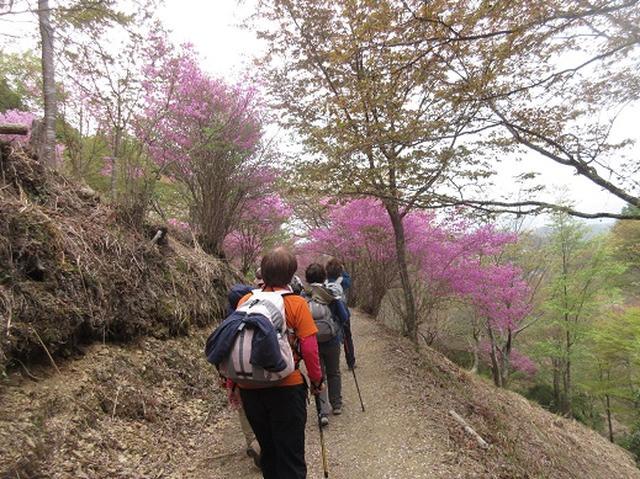 画像2: 【山旅会】吉野山・青根ヶ峰に登ってきました!