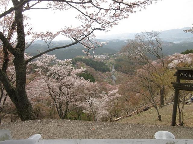 画像3: 【山旅会】吉野山・青根ヶ峰に登ってきました!