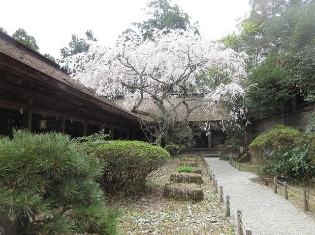 画像4: 【山旅会】吉野山・青根ヶ峰に登ってきました!