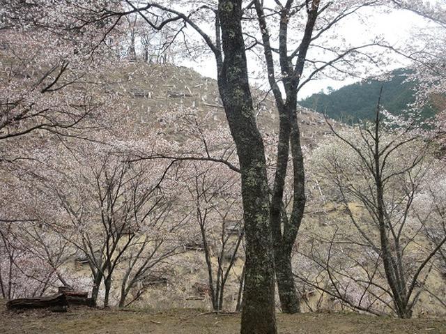 画像7: 【山旅会】吉野山・青根ヶ峰に登ってきました!