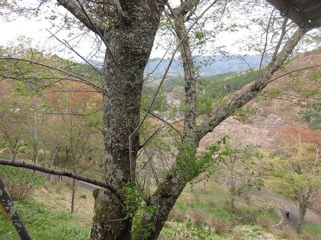 画像11: 【山旅会】吉野山・青根ヶ峰に登ってきました!