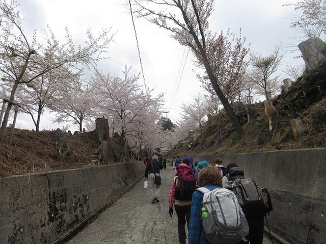 画像5: 【山旅会】吉野山・青根ヶ峰に登ってきました!