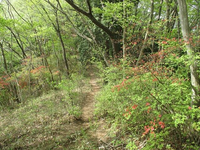 画像4: 【山旅会】雨巻山で春の足慣らし!