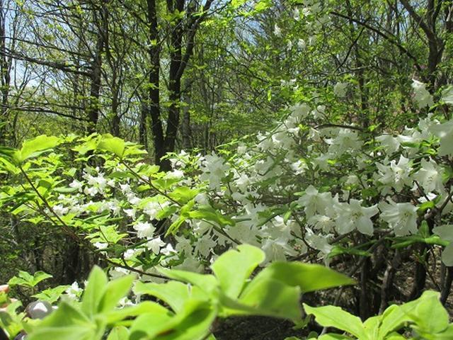 画像5: 【山旅会】井戸湿原ハイキングのご案内