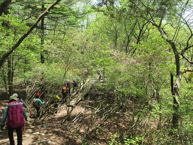画像4: 【山旅会】井戸湿原ハイキングのご案内