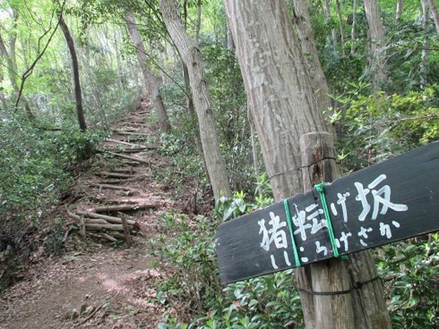 画像5: 【山旅会】雨巻山で春の足慣らし!