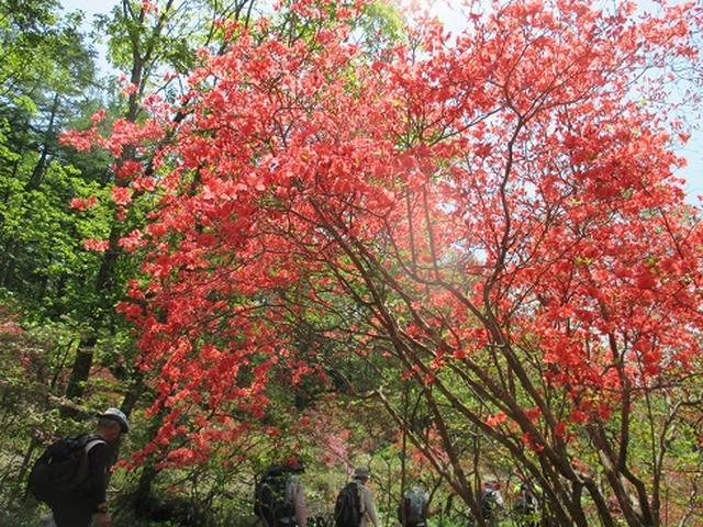 画像7: 【山旅会】井戸湿原ハイキングのご案内