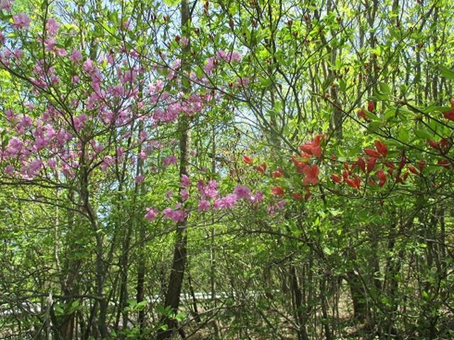 画像2: 【山旅会】井戸湿原ハイキングのご案内