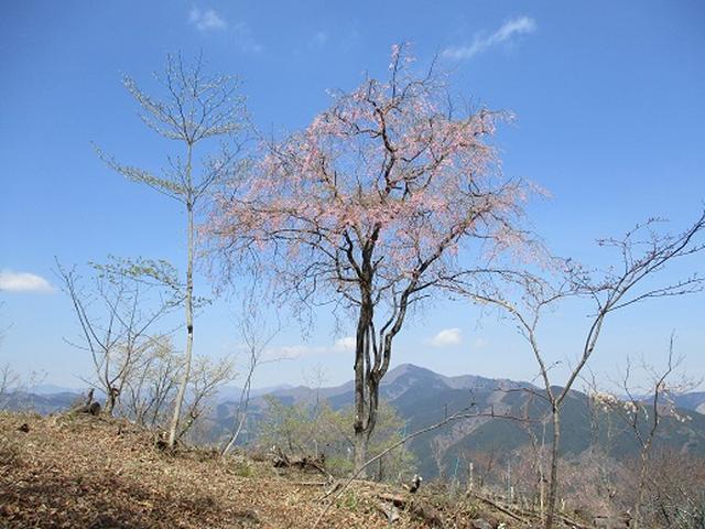 画像7: 【山旅会】浅間嶺