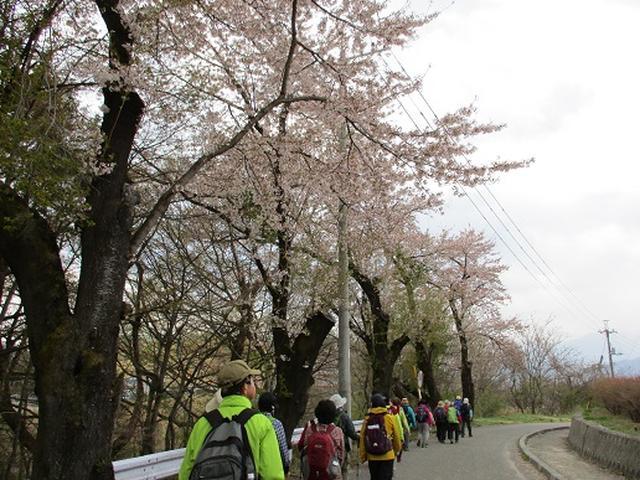 画像1: 【山旅会】オオムラサキ自然歩道