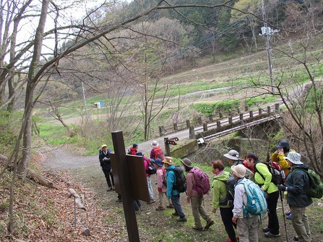 画像3: 【山旅会】オオムラサキ自然歩道