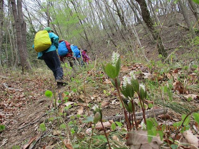画像7: 【山旅会】オオムラサキ自然歩道